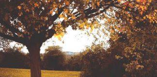 compunere descrierea unui copac prin comparaţii