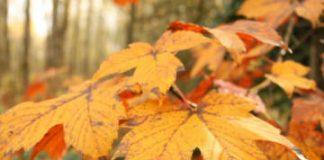 compunere peisaj de toamna cu copaci și frunze