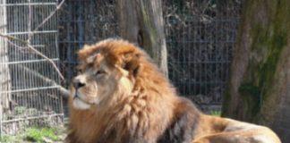 În excursie la gradina zoologica