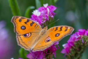 Expresii frumoase despre fluturi, păsări în anotimpul primăvara