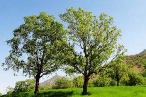Expresii Frumoase Despre Natură în Anotimpul Primăvara