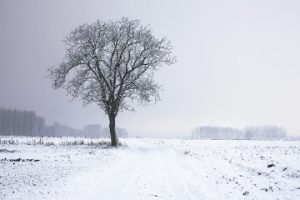 Compunere - Descrierea unui peisaj de iarnă