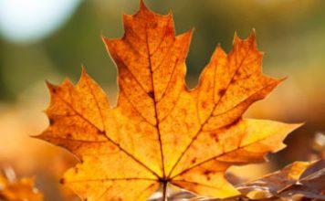 Compunere - Dialog între toamnă și o frunză