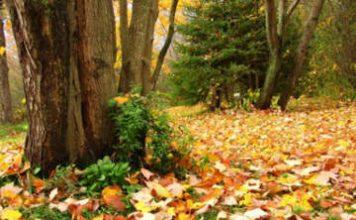 Toamna cad frunzele vestede ale copacilor