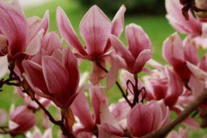 Expresii frumoase despre plante, flori în anotimpul primăvara