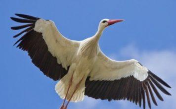 Dialog între o barză și o egretă